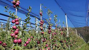 Fotografia de El cultivo del manzano en España: situación actual e innovación varietal