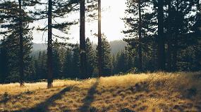 Foto de Día Forestal Mundial, una ocasión para poner en valor el papel de los EPI en la protección de los agentes forestales