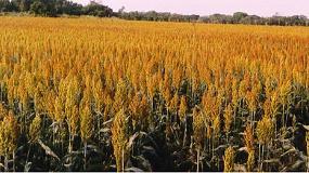 Foto de El Gobierno reduce el IRPF a ciertos productores agrícolas