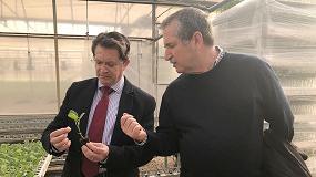 Picture of Murcia lidera la producción nacional de plantas hortícolas