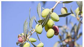Foto de Puerta abierta para revalorizar aceites de oliva, orujos crudos y otros subproductos del olivar