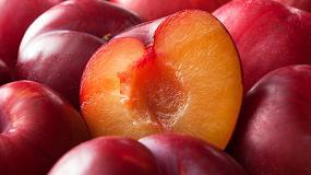 Foto de Fisiología y tecnología de la maduración en postcosecha: situación actual y nuevas tendencias en el sector frutícola