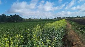 Foto de Apis extiende la biodiversidad en los cultivos de tomate extremeños