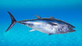 Foto de Nuevas relaciones biométricas permiten una mejor estimación del peso del atún rojo