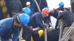Foto de La flota atunera española, líder mundial en la aplicación de buenas prácticas para reducir las capturas incidentales