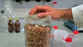 Foto de La ULE analiza si el hongo 'Trichoderma harzianum' puede contribuir al control de una plaga de las alubias