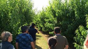 Foto de Tarazona muestra el éxito de su estrategia de fertilización en melocotón