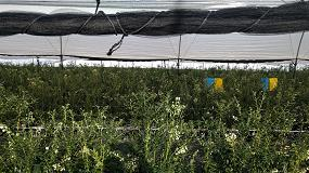Foto de Projar recomienda recurrir al cultivo hidropónico para mejorar los rendimientos del arándano
