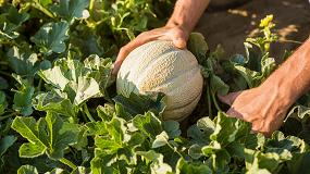 Foto de BASF se hace con el negocio de semillas hortícolas de Bayer