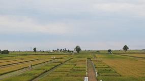 Foto de La jornada IRTA de referencia sobre el cultivo del arroz celebra 25 años al lado del sector