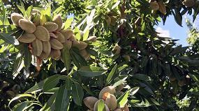 Foto de Bases del relanzamiento del cultivo del almendro en España