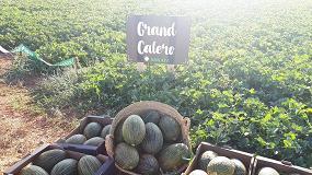 Foto de Grand Calero, la novedad de Sakata en melón