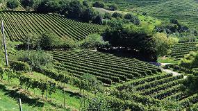 Foto de Neiker-Tecnalia apuesta por la reducción de fitosanitarios en el viñedo atlántico
