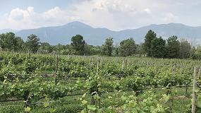 Foto de Actualizado el procedimiento de concesión de autorizaciones para nuevas plantaciones de viñedo