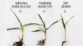 Foto de Fertiberia confirma el valor agronómico de los abonos complejos SulfActive NPK