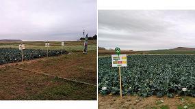 Foto de Tarazona e Intia organizan una Jornada de Campo de brócoli