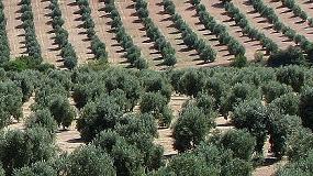 Foto de Excelencia, eficiencia, singularización y prescripción, claves en el futuro de la olivicultura extensiva