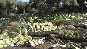 Foto de La preocupación entre los olivareros jienenses se centra en el bajo rendimiento de la aceituna