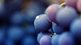 Foto de Determinación no invasiva de la composición de la uva
