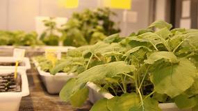 Foto de Un estudio demuestra que las plantas pueden desarrollar proteínas antifúngicas