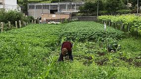 Foto de El MAPA insiste en su apoyo al empoderamiento de la mujer en el medio rural