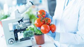 Foto de El aroma de tomate protege a las plantas de los ataques de las bacterias y mejora el rendimiento de los cultivos