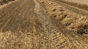 Foto de La falta de rentabilidad impacta en los cereales de invierno