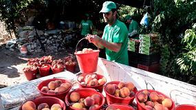 Foto de Abierto el plazo de solicitud de ayudas para crear organizaciones supraautonómicas de productores