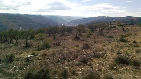 Foto de Las dificultades que se presentan en la expansión de la olivicultura a nivel internacional