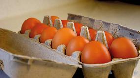 Foto de Preparado de calcio para fortalecer el cascarón de huevo