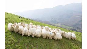 Foto de Estudian cómo identificar las mejores ubres de razas de ovejas lecheras del Pirineo