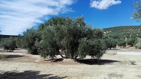 Foto de EPIK y STILO HYDRO, la protección total del olivo