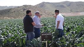 Foto de Sakata presenta Mykonos, su variedad de brócoli para el verano