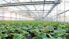 Foto de La mosquilla negra en los cultivos biológicos