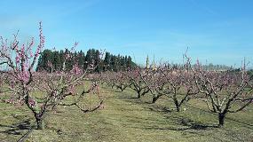 Foto de Influencia de diferentes patrones Prunus sobre el contenido de azúcares, ácidos orgánicos y compuestos antioxidantes del fruto de la nectarina 'Big Top'