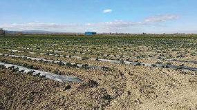 Foto de Un proyecto demuestra que los plásticos biodegradables son viables y sostenibles para su uso en agricultura