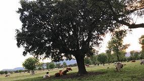 Foto de Reparto de fondos para programas agrícolas, ganaderos, de alimentación y de desarrollo rural