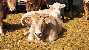 Foto de Murcia se postula como un modelo de bienestar animal de vacuno de carne