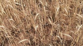 """Foto de UPA constata """"graves pérdidas por la sequía"""" en agricultura y ganadería"""