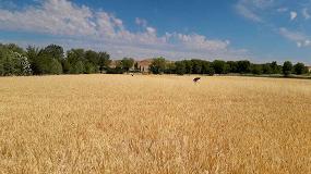 Foto de Las indemnizaciones del seguro agrario por sequía en el cereal superarán los 100 M€