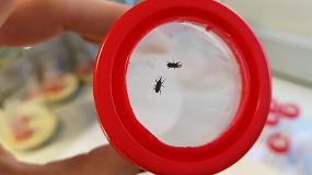 Foto de Un envase que evita plagas de insectos en alimentos secos