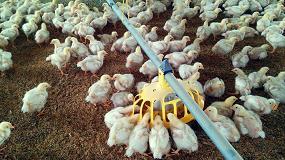 Foto de ChickenBoy, el primer robot inteligente para la producción avícola