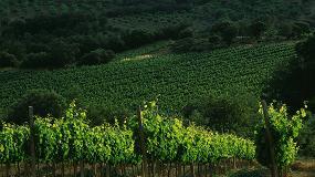 Foto de La DOCa Rioja cuenta con 84 nuevos viñedos singulares