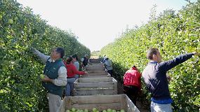 Foto de Sistemas de plantación en frutales adaptados a la mecanización, eficiencia y efecto en los costes de producción