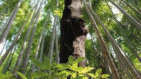 Foto de La mirada holística del bosque