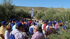 Foto de El programa de tratamientos de Syngenta logra reducir la 'vecería' del olivar