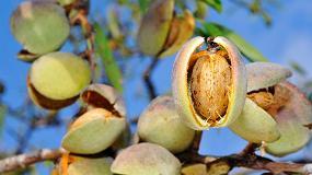 Foto de Situación y perspectivas del cultivo del almendro en Castilla y León