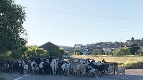 Foto de El scrapie atípico de ovejas y cabras puede dar origen a la cepa de prion causante de la epidemia de las 'vacas locas'