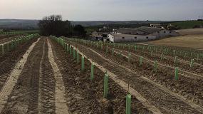 Foto de El MAPA incluye las variedades recomendadas de portainjertos en el RD de potencial vitícola