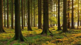 Foto de Veolia Biomasa España produjo 80.700 toneladas de biomasa procedentes de astilla forestal